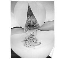 Magnolia Matchsticks Poster