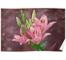 Pink lilies - textured Poster