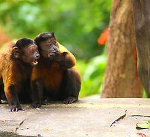 The Gossipers by Jennifer Lam