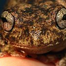 Peron's Tree frog! by KiriLees