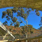 Circular Bridge by Eve Parry