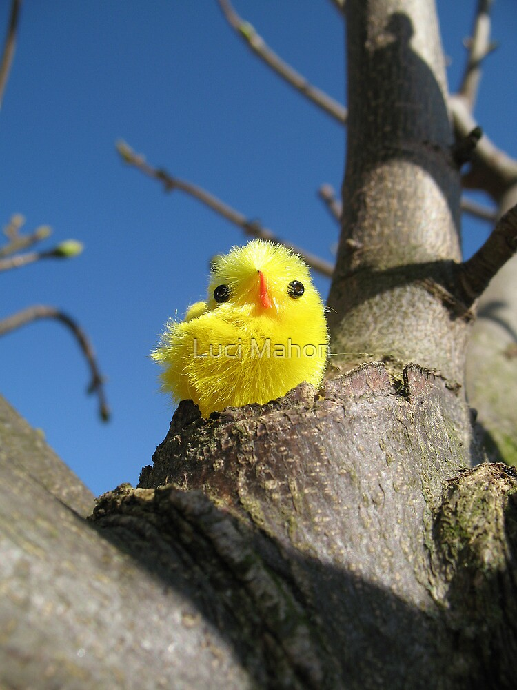Chick in a Tree by Luci Mahon