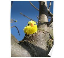 Chick in a Tree Poster