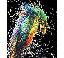 Painted Parrot Photographic Print