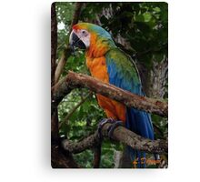 Striking Colors Canvas Print
