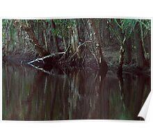 Sacred Kingfisher in Habitat Poster