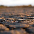 Parched land by MuscularTeeth