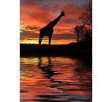 By the Waterhole Photographic Print