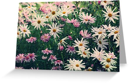 A Daisy a Day by Lynda Heins