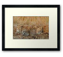 Leopards relaxing Framed Print