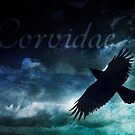 Corvidae Sky by Rookwood Studio ©