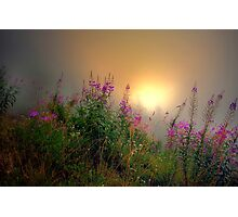 Cascades Fog and Fireweed Photographic Print