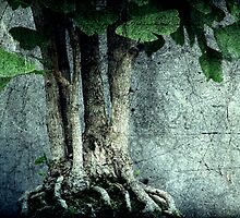 Roots by Christine Annas