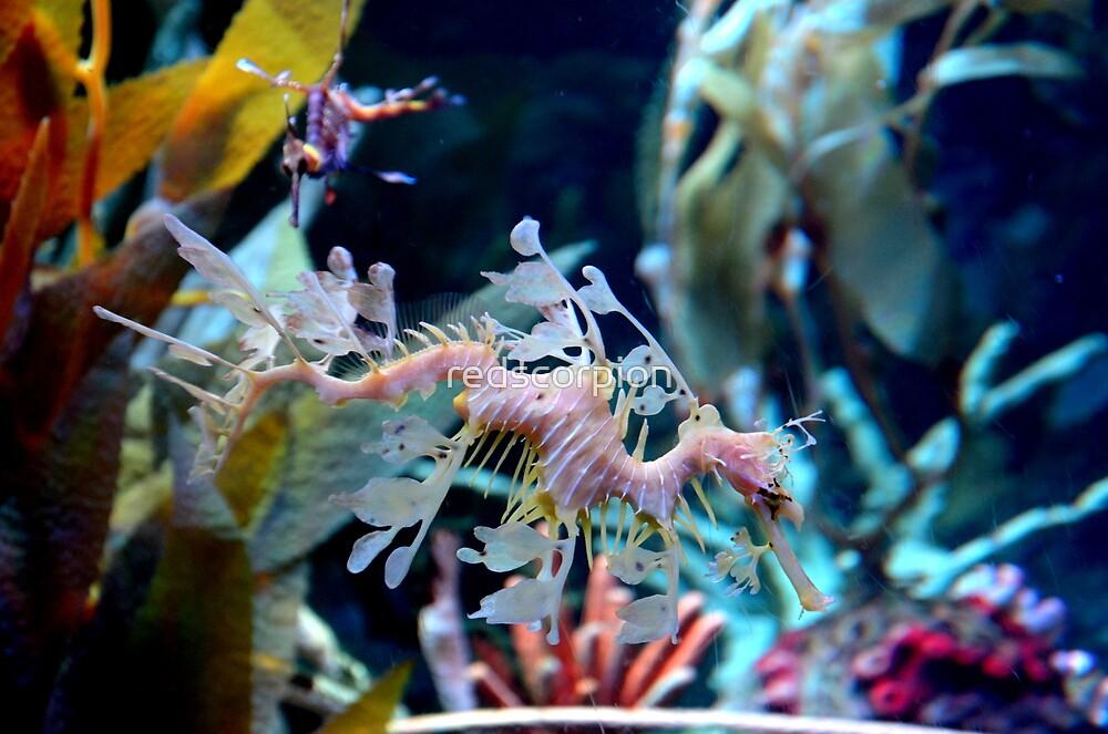 Leafy Sea Dragon by redscorpion