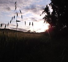 Sunset over cross-shaped grass by Jade Rogers
