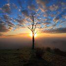 Tree Star by Donovan Wilson