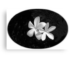 Simplicity in Black & White  Canvas Print