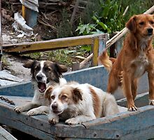 Boat Dogs of Xochimilco by styles