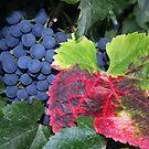 Grape Leaves by CherylBee