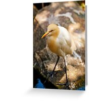 Under The Shade Greeting Card