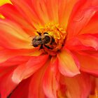Hey bee, stop moving the flower..... by DaveHrusecky