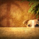 A peaceful Jack Russell by Myillusions