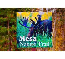 Mesa Nature Trail Photographic Print