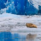 While in Alaska by Kathy Cline