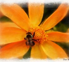 Just another bee..... by DaveHrusecky