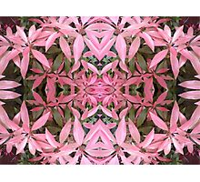 flower collage in pink Photographic Print