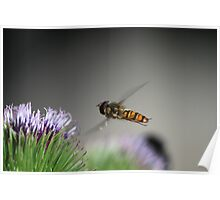 Hover fly flying  Poster