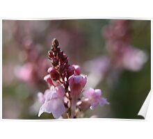 Tiny pink flower Poster