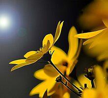 Good Morning Sunshine by Eileen Aquiningoc  Schwake