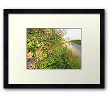 A wild Irish road! Framed Print