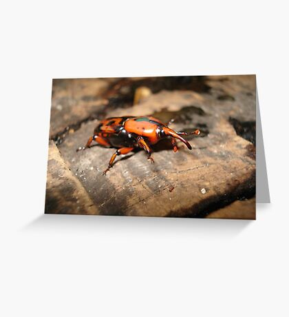 PALMETTO WEEVIL Greeting Card