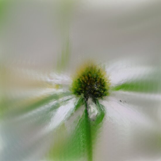 *Flower Impressionism I* by DeeZ (D L Honeycutt)