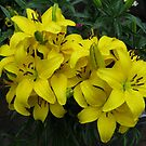 Lovely Lemon Lilies by BlueMoonRose
