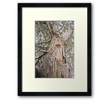 Halls Gap Sentry Framed Print