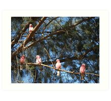Galahs in a tree Art Print