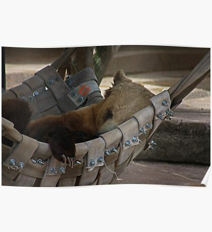 Letting Sleeping Bears Lay Poster