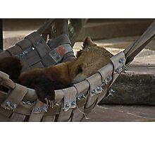 Letting Sleeping Bears Lay Photographic Print