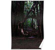 Rainforest Hike Poster