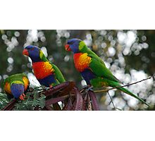 Three of a kind Wins Photographic Print