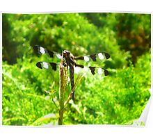 Dragonfly 12 spotted male skimmer Poster