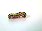 Yellow-Striped armyworm - Spodoptera ornithogalli by MotherNature