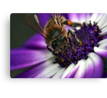 Bee in the midst ~ Canvas Print