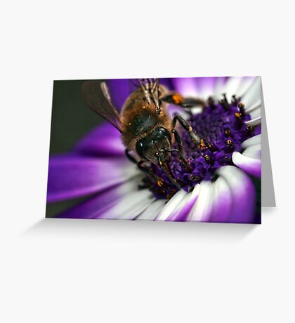 Bee in the midst ~ Greeting Card