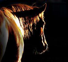 Golden darkness by kurrawinya