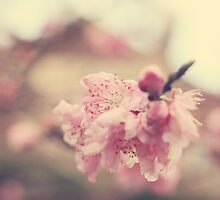promising spring by Yu-Jie Yu