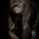 Gorilla by Pam Hogg